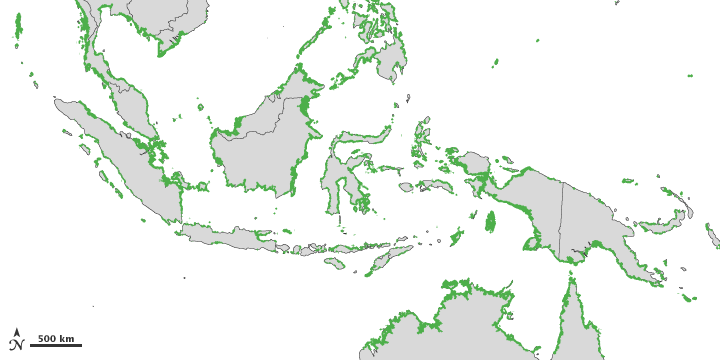 Hutan Bakau Mangrove Indonesia Di Pantai Pantai Hutan