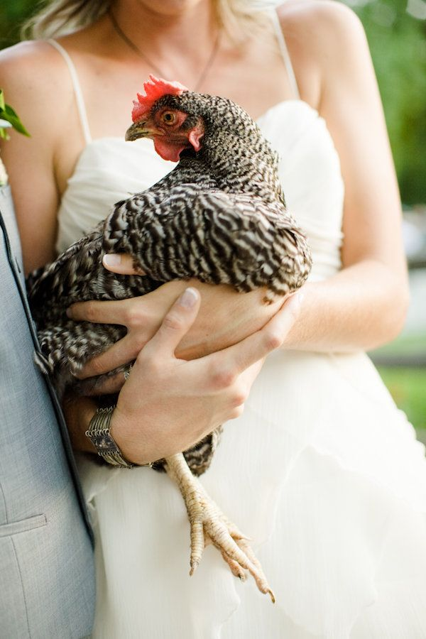 Um, what wouldn't I do to get to hold a chicken in my wedding dress?