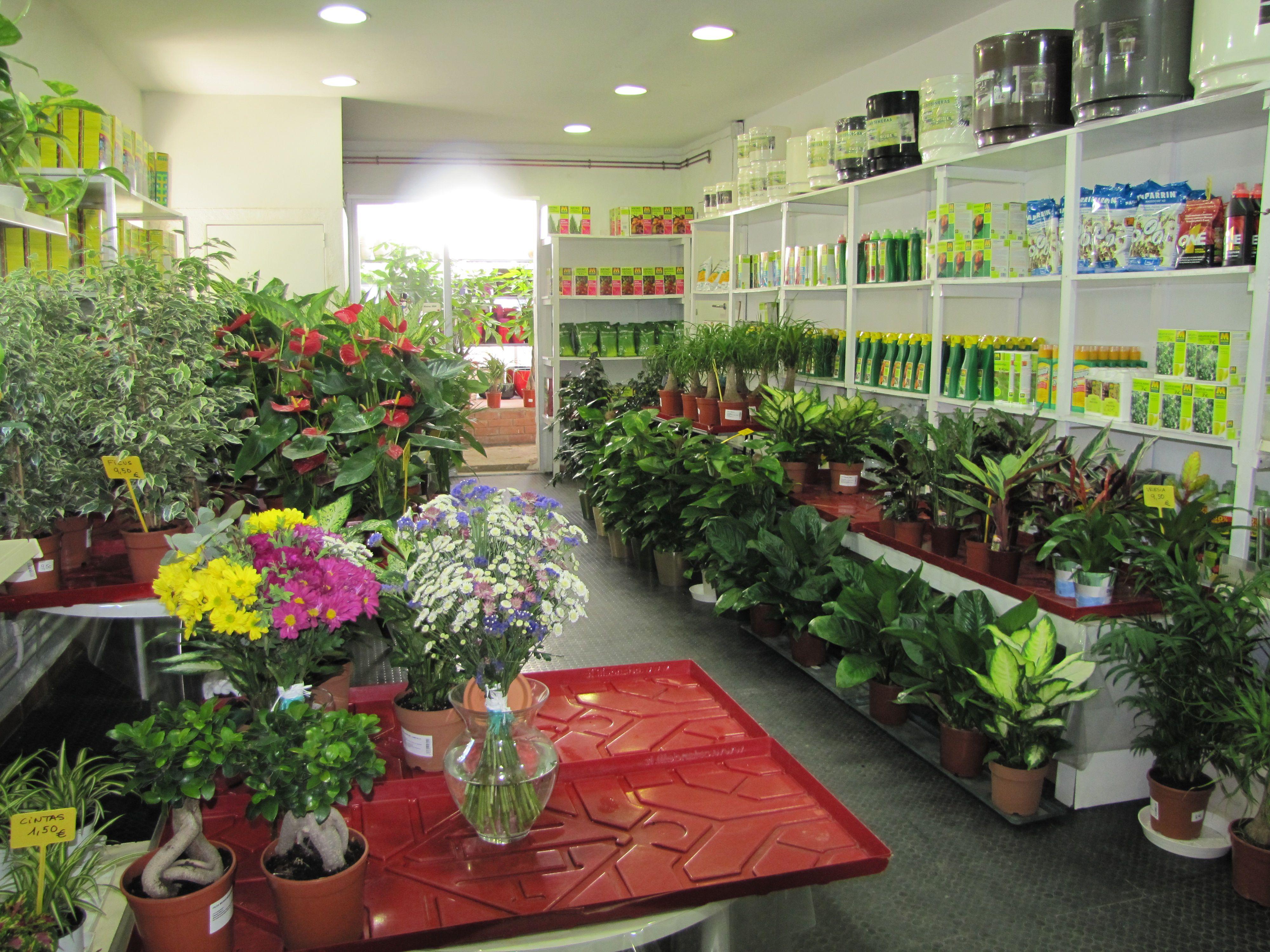 La tienda de nuestro vivero con plantas de interior for Viveros plantas de interior