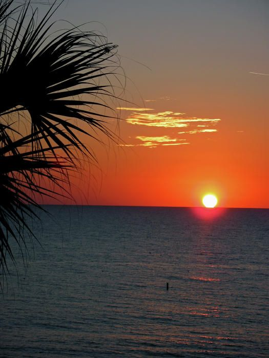 ✯ Palmtree Sunset