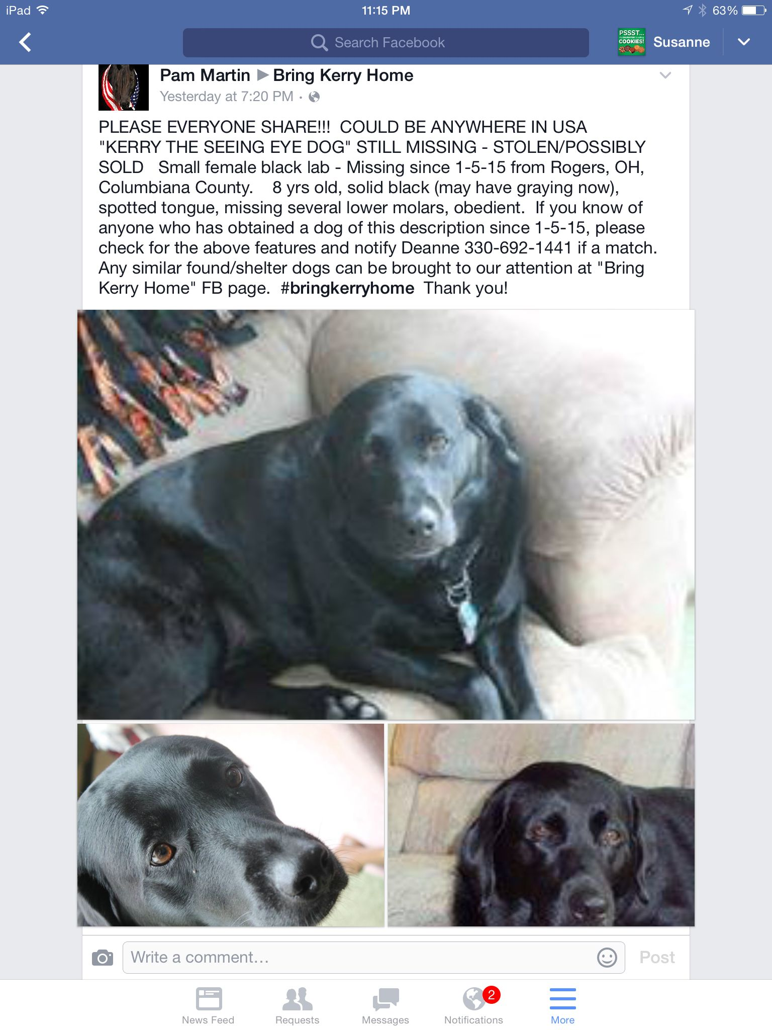 Black Lab Stolen Seeing Eye Dog From Ohio Missing Since