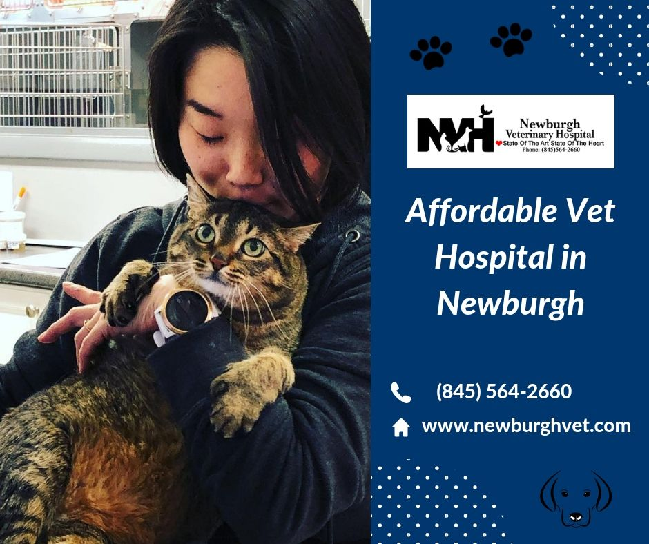 Newburgh Veterinary Hospital Offers Affordable Veterinary Services