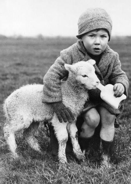 +~+~ Vintage Photograph ~+~+  Little lamb being fed by a little farmer ~ 1937