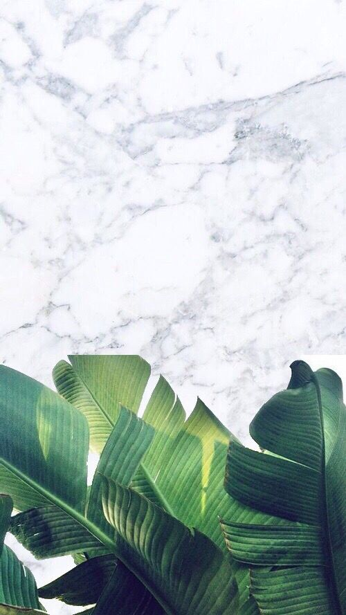 marble  white  background  plants  green