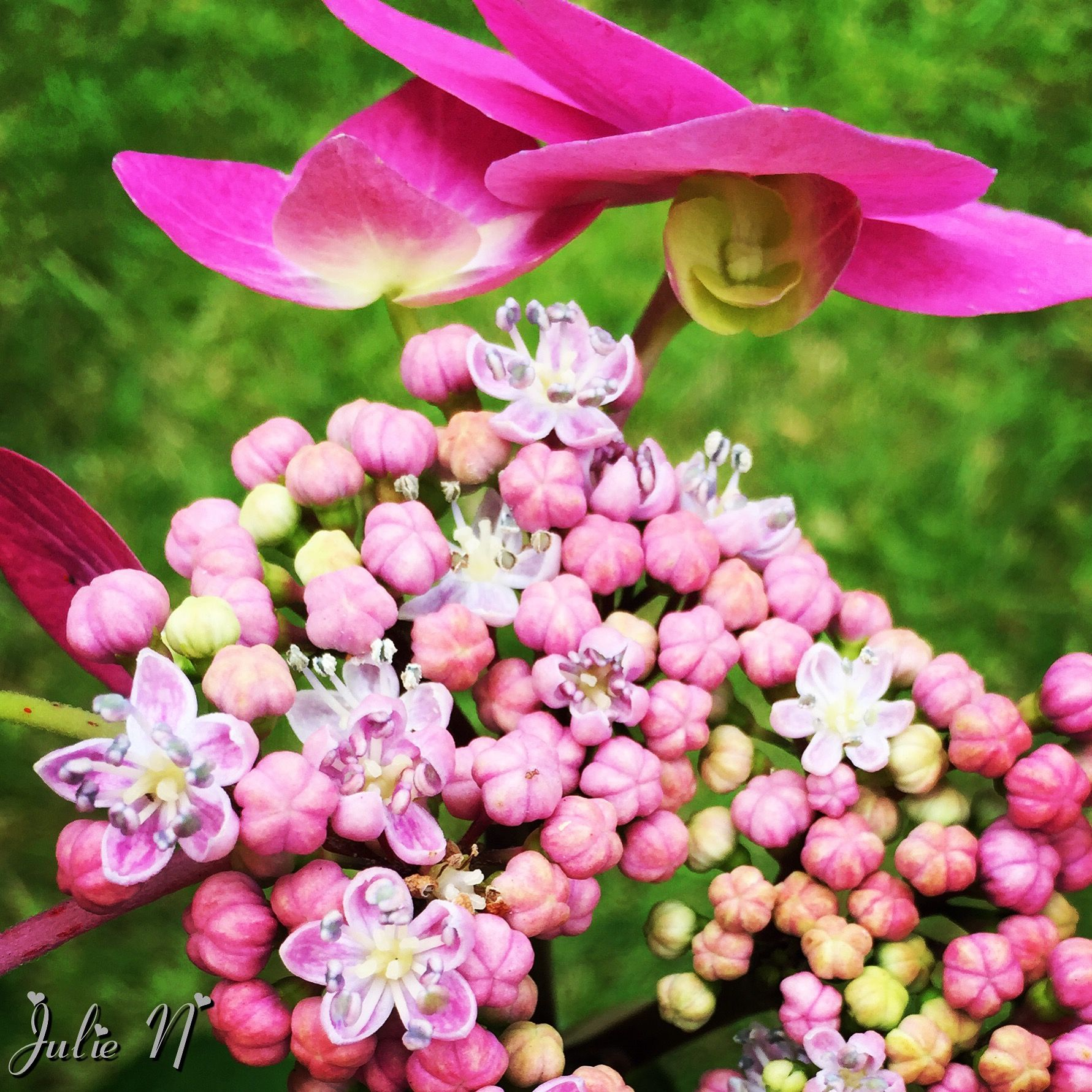 Can you see the smiley face flowers pinterest beautiful can you see the smiley face izmirmasajfo