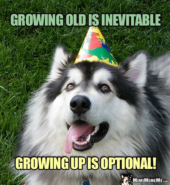 Birthdays Are Hilarious Happy Birthday Jokes Funny Party: Dog In Party Hat Says: Growing Old Is Inevitable. Growing