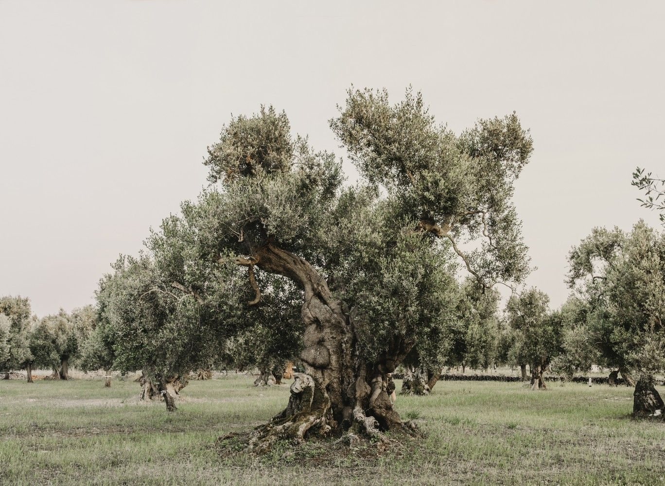 Galería de Masseria Moroseta / Andrew Trotter - 7