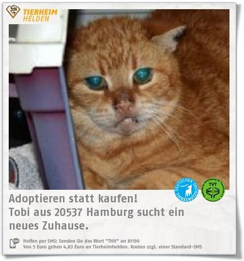 Tobi wurde am Hamburger Hauptbahnhof gefunden und kam ins