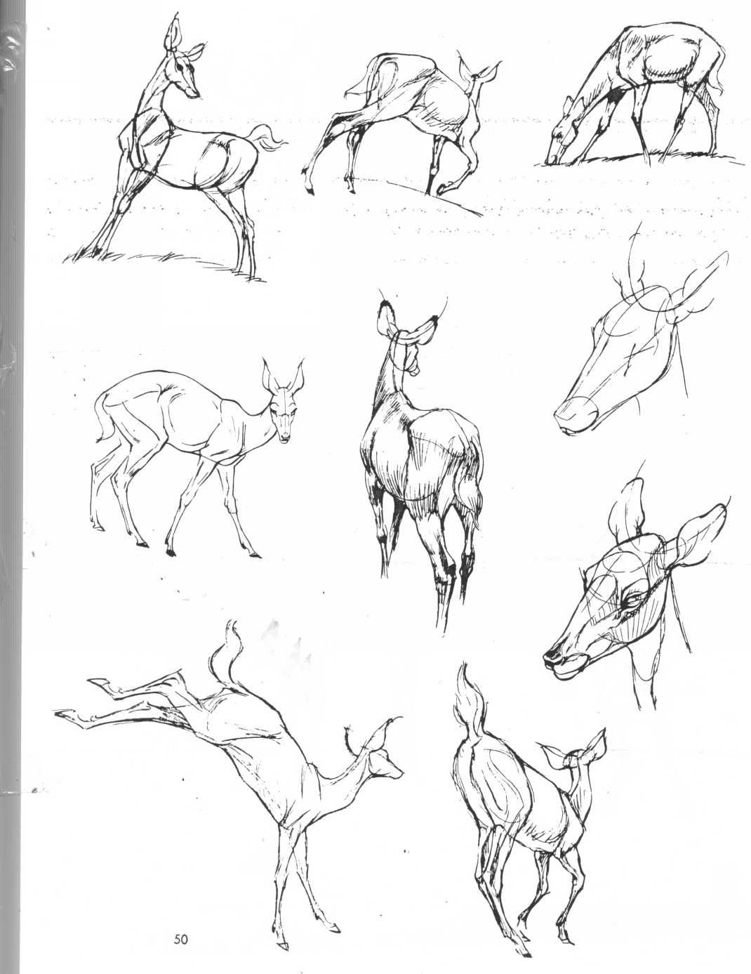 Pin by Sarah Steen on Art | Pinterest | Draw animals, Drawings and ...