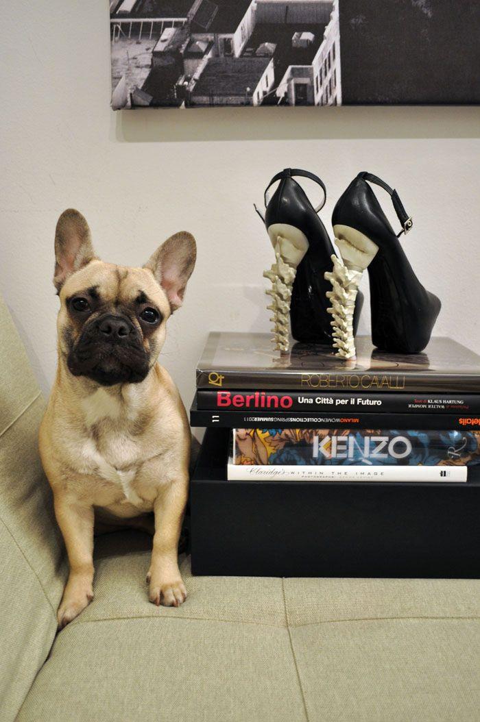Pup + Dsquared bone shoes
