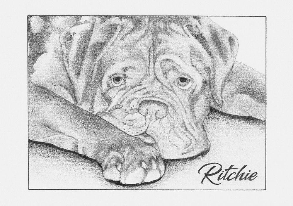 Realistic Portrait Of Our Former Bordeaux Dog Ritchie 07 2017 Bordeaux Dog Flash Drawing Lion Sculpture
