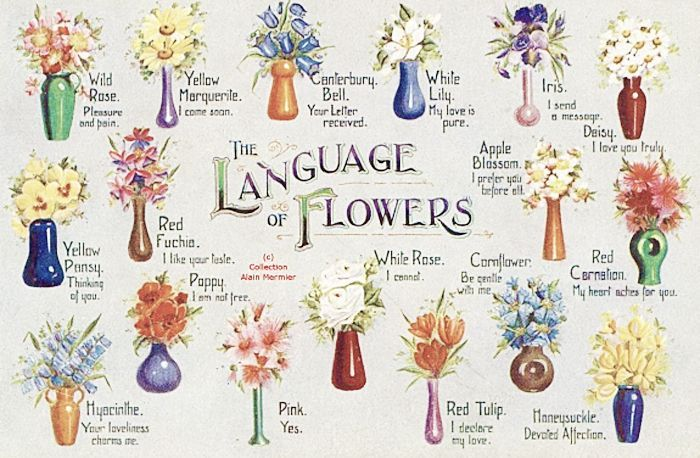 The Language Of Flowers Gray Davis Antique Custom Jewelry Flower Meanings Language Of Flowers Victorian Flowers