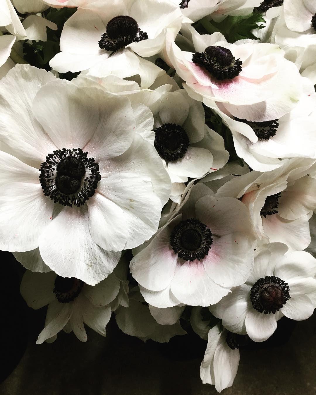 209 Likes 7 Comments Bower Botanicals Bowerbotanicals On