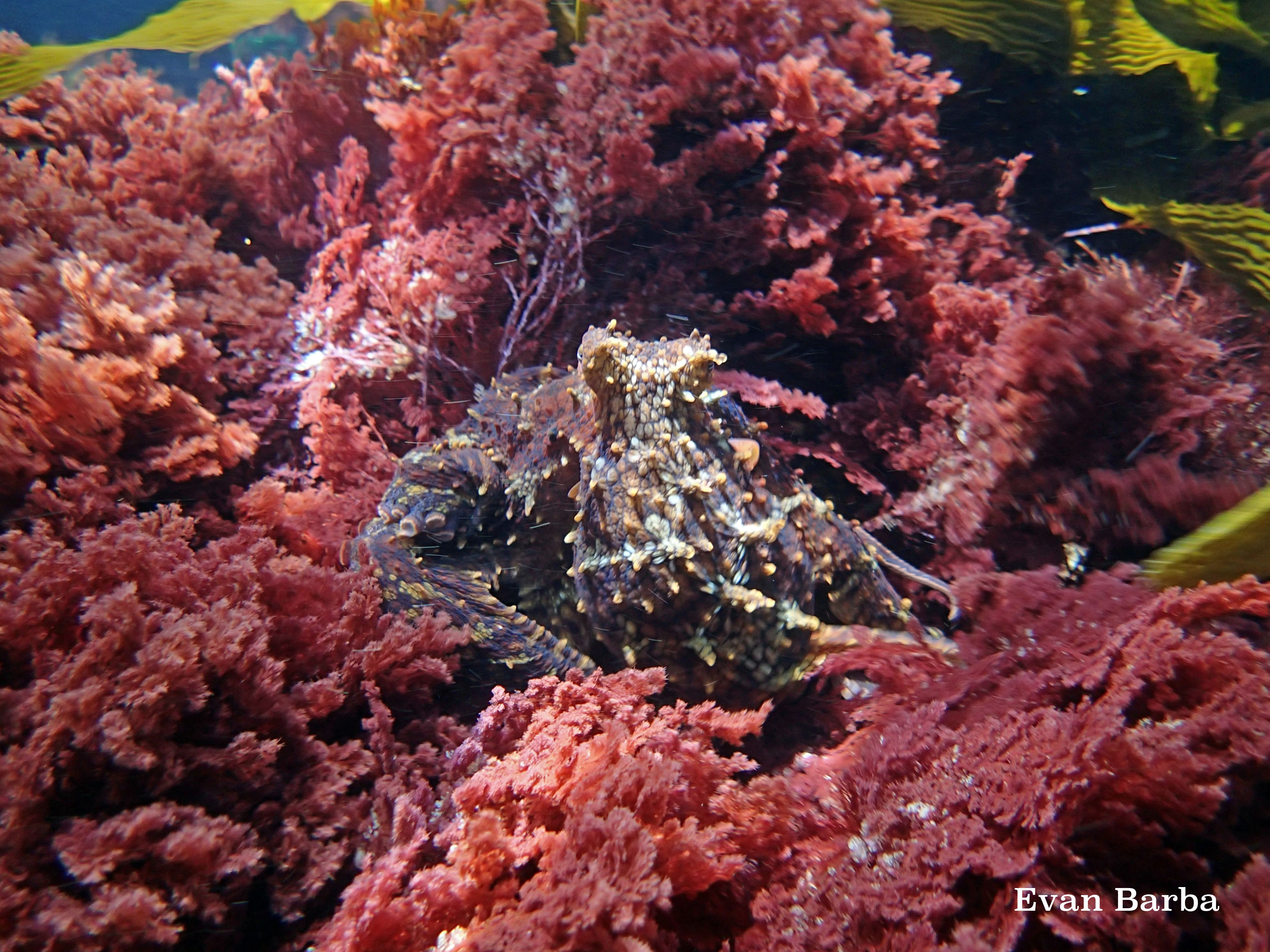 Ecology Of Seaweed And Its Environmental Significance Ccber Ecology Kelp Forest Environment