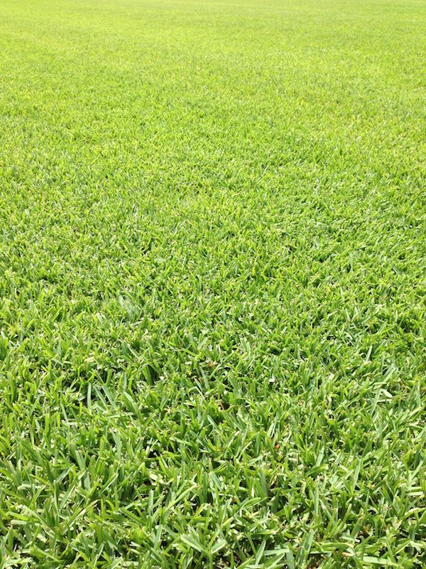 Floratam St Augustine Gr Sod Field Of Green Turf Services Houston Tx Fieldofgreenturf Gmail