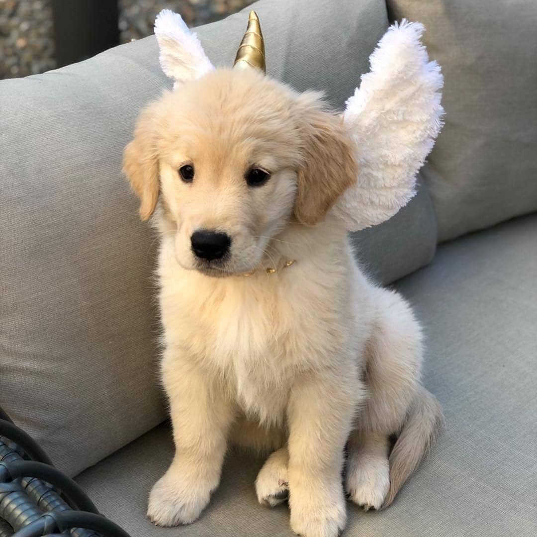 11 Grote Pluizige Hondenrassen Perfect Om Mee Te Knuffelen Als Je