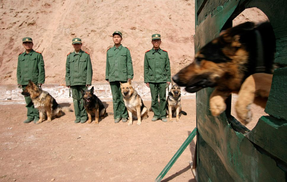 """Foreign Policy Photo Essay on war dogs """"...a police dog"""