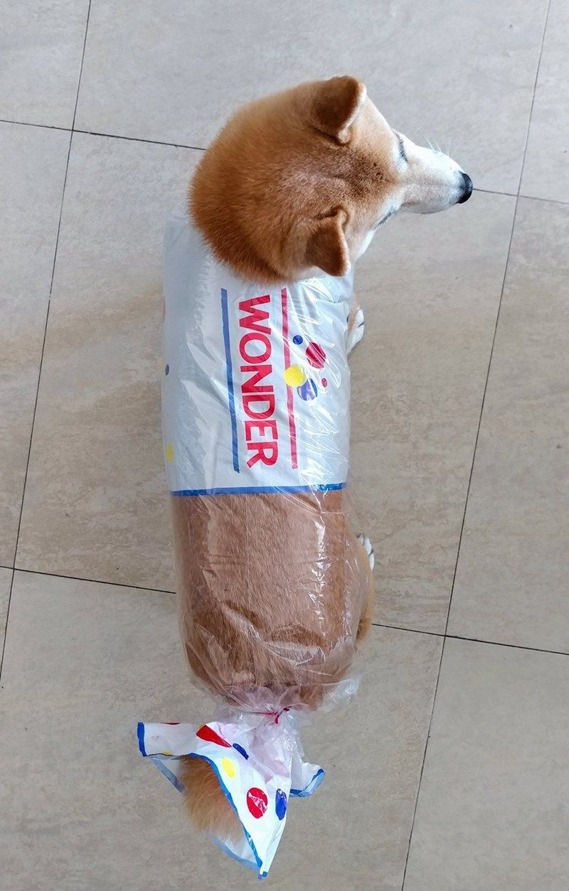 Dog Memes 30 Pics Pet halloween costumes, Cute animals