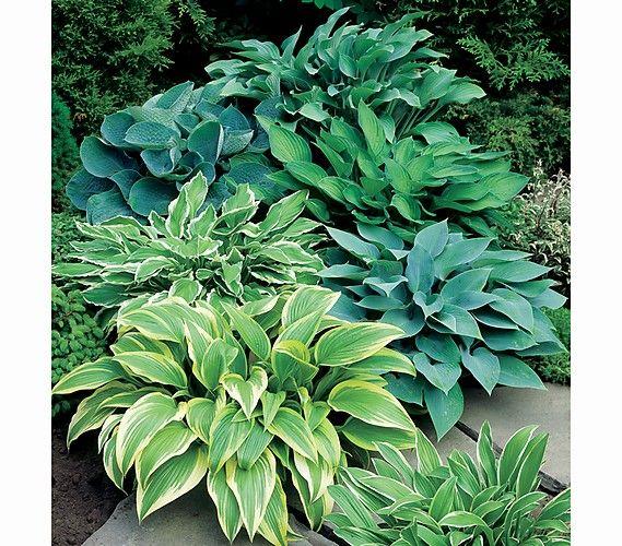 pin von elke mauerer auf garten pinterest pflanzen garten und pflanzen pflege. Black Bedroom Furniture Sets. Home Design Ideas
