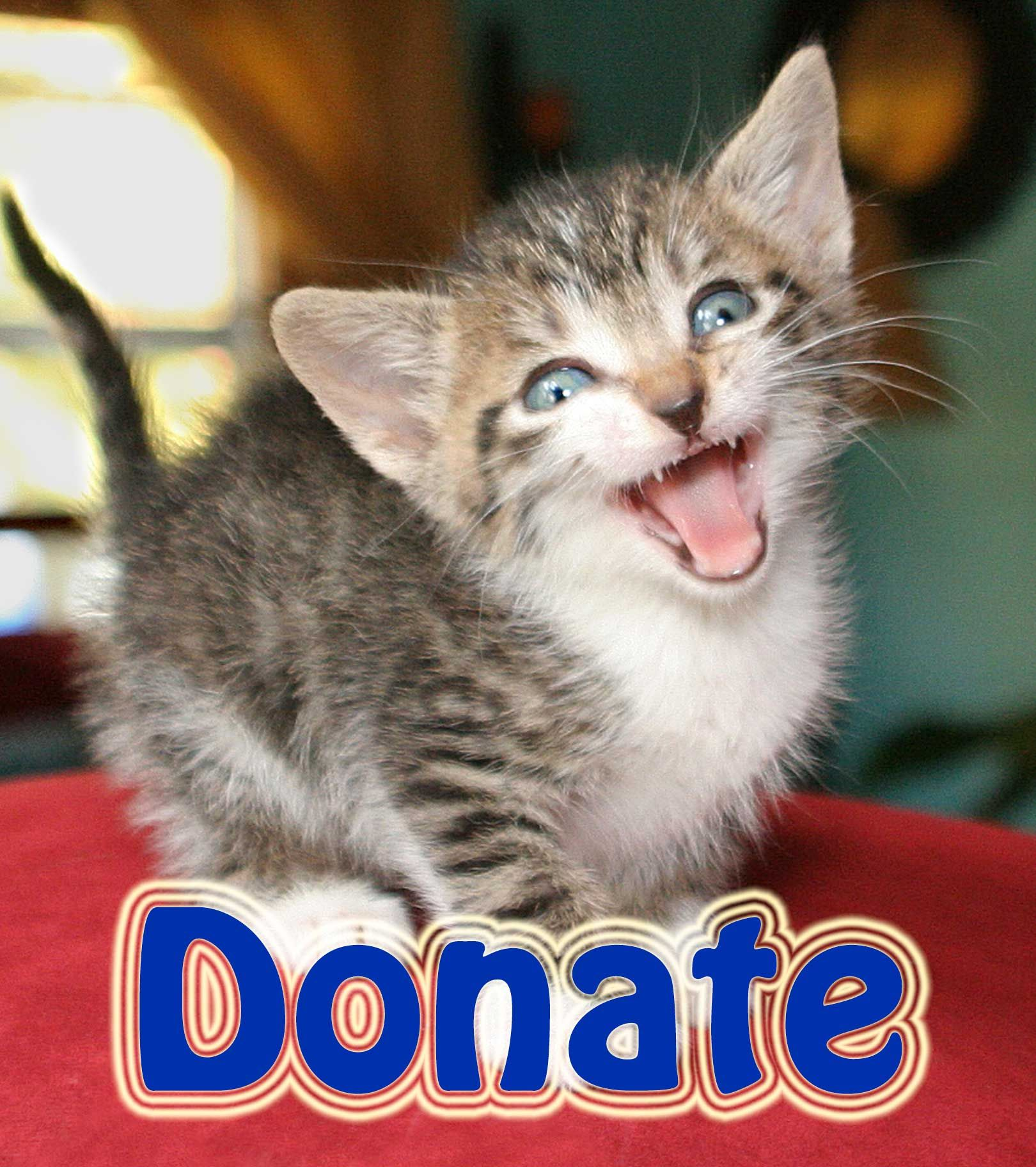 donate home page Save animals, Animals, Donate