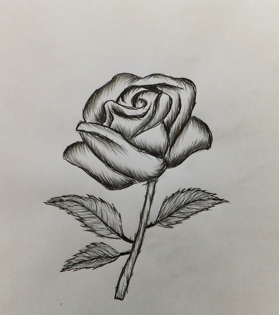 How To Draw A Rose Easy For Roses Drawing Easy Drawings Rose Drawing