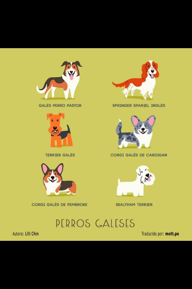Perros Galeses