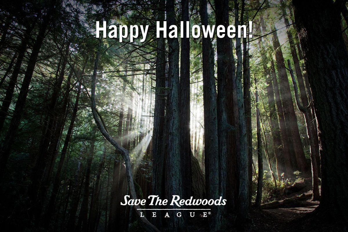 happy halloween magical forestdark