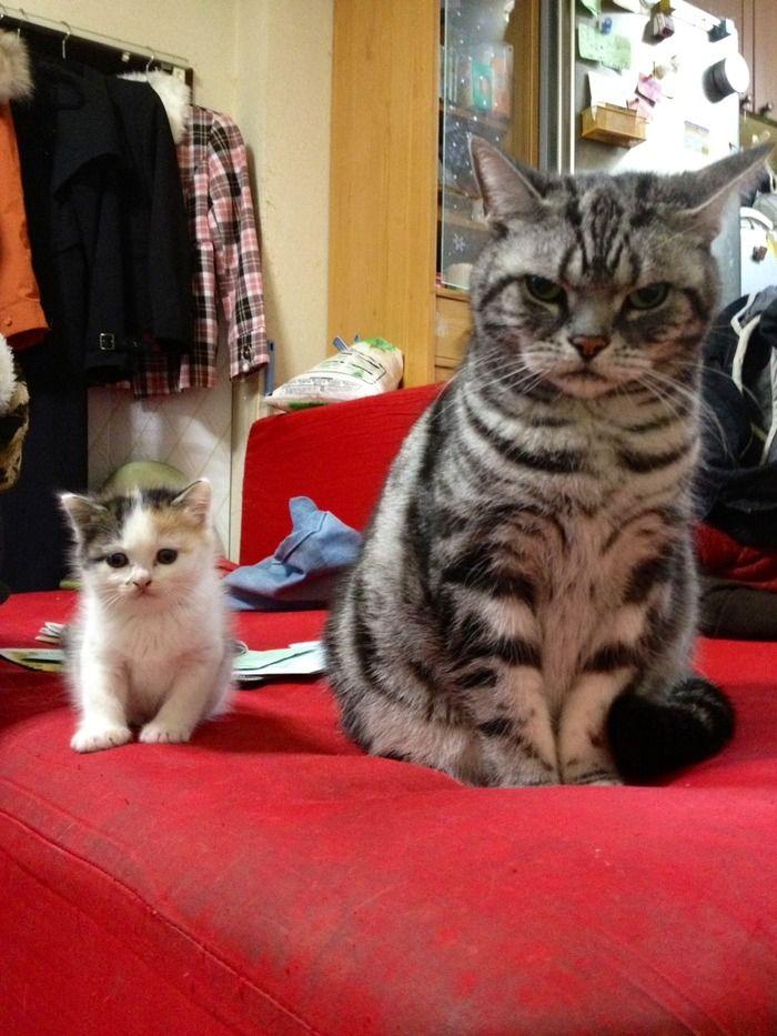 うちの猫を自慢したい:ハムスター速報