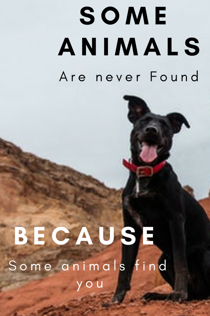 "The Company ""Found Animals"" is dedicated to finding"