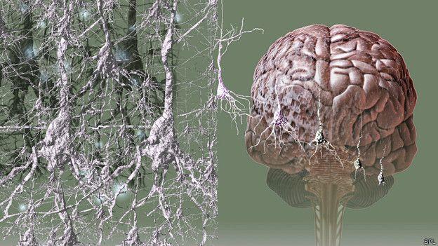 Las prioridades para la investigación sobre el Alzheimer. http://www.farmaciafrancesa.com