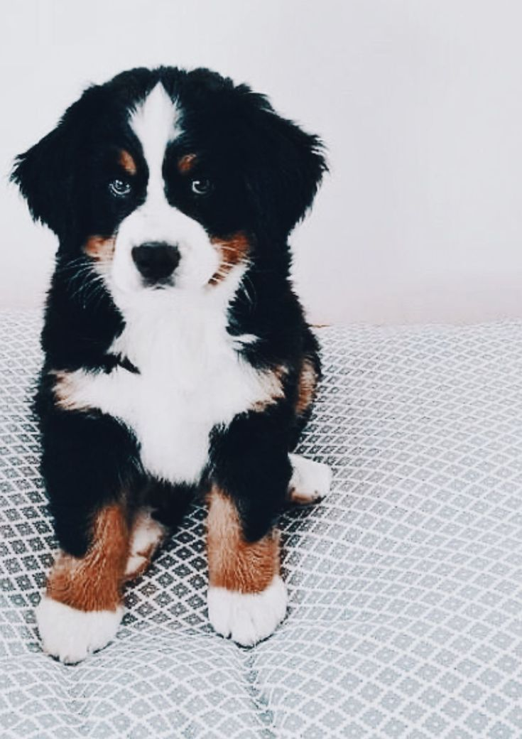 Pin By Natalia On Cute Animals In 2020 Cute Baby Animals Cute Animals Cute Dogs