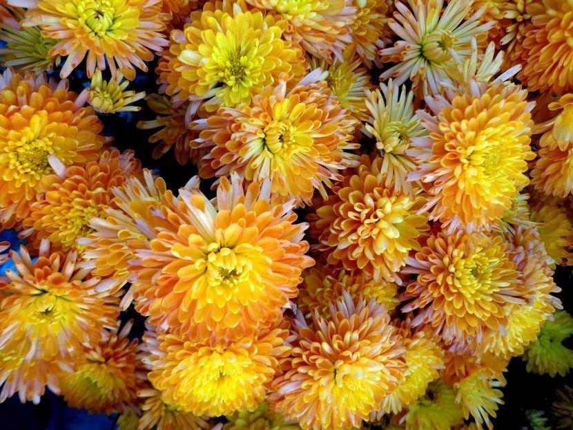 Plantas para cultivar en otoño - http://www.jardineriaon.com/plantas-para-cultivar-en-otono.html