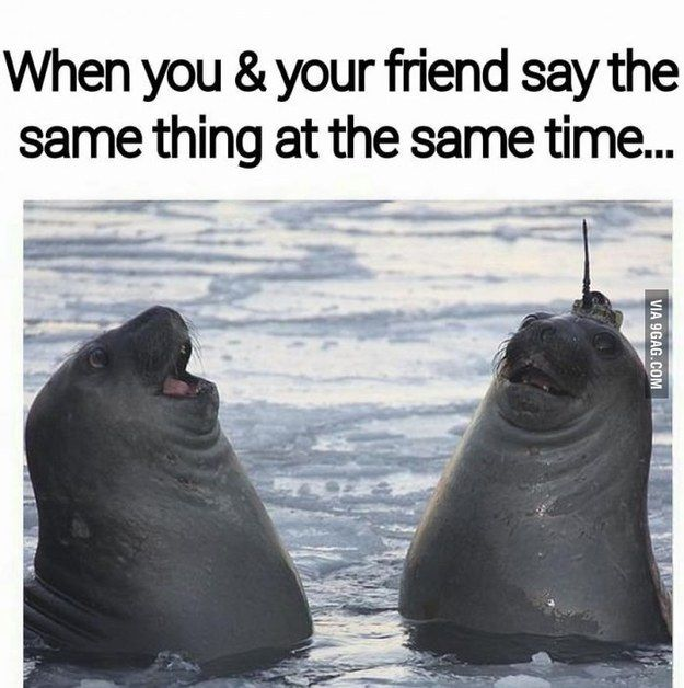 You Have A Habit Of Saying The Exact Same Things At The Exact Same Times Friend Memes Funny Pictures Funny