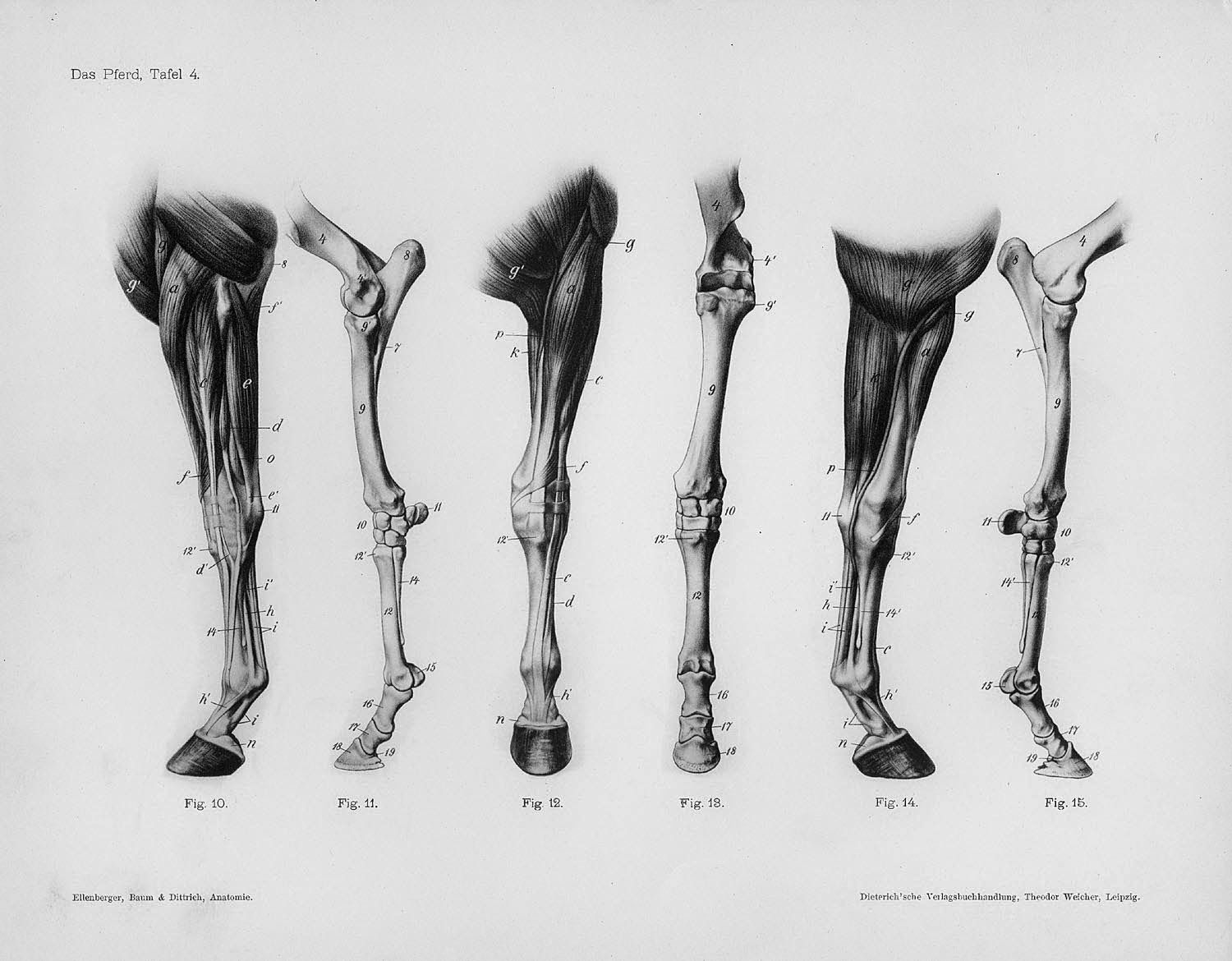 Pin by Kristy Meeuwissen on Horse anatomical | Pinterest | Horse ...