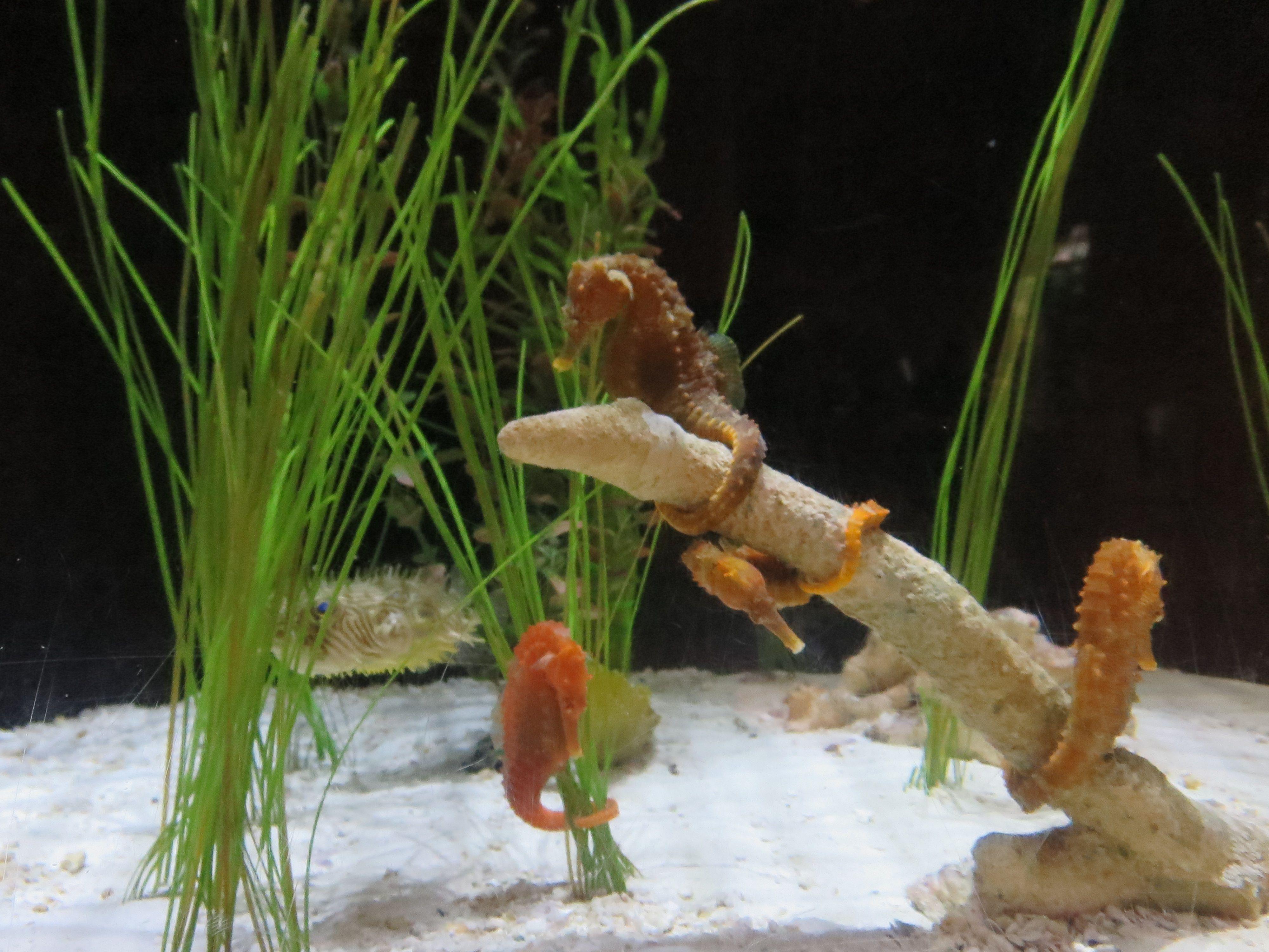 30eb5fa244edcde82237a32c85b6d9be Frais De Aquarium Tropical Schème
