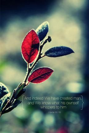From The Quran Iphone 5 WallpaperIphone BackgroundsFunky WallpaperHoly QuranIslamic QuotesIslamic