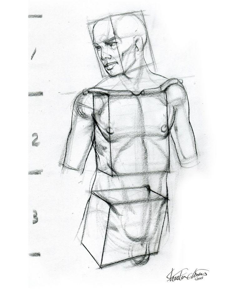 figure drawing basic form torso - Google Search | Art & Anatomy ...