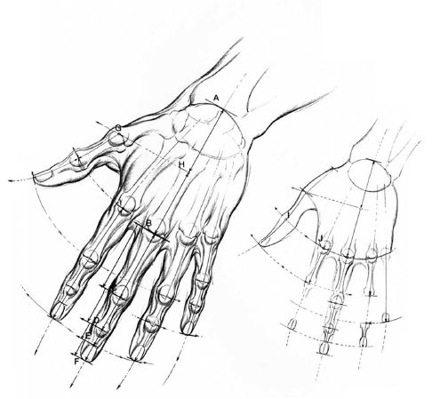 Burne Hogarth Drawing Dynamic Hands 9 How To Draw Hands