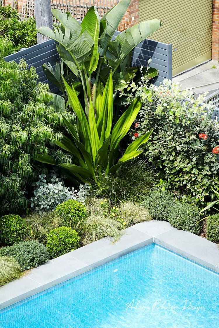 Adam Robinson Design Landscape Design Project 09 Coogee 08 Jpg Tropical Pool Landscaping Landscape Design Backyard Pool Landscaping