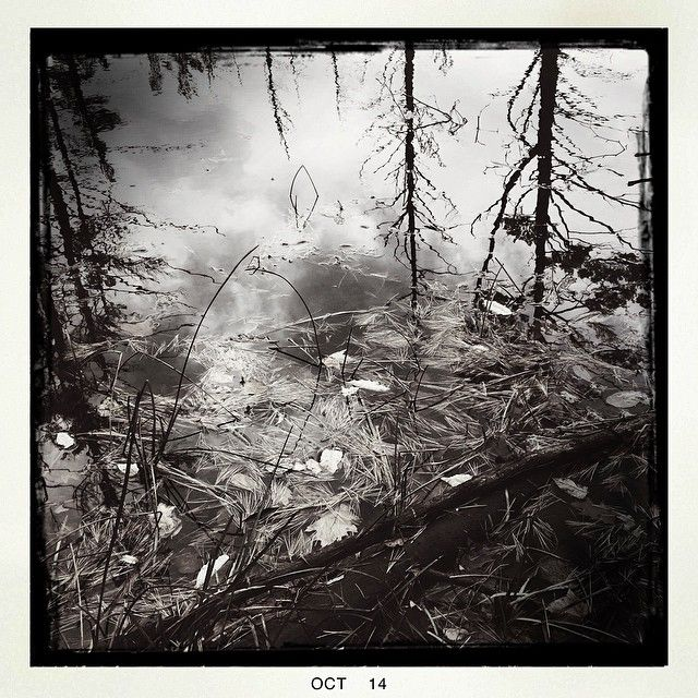 Reflection in a small brook on one of my trail runs that I sometimes stop at for a short meditation and yoga flow #adirondacks #trailrun #fineartphotogrqphy #woods #brook #meditation #yoga #carlrubinophotography.com #woodsphotography