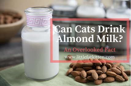 Can Cats Drink Almond Milk? An Overlooked Fact Cat