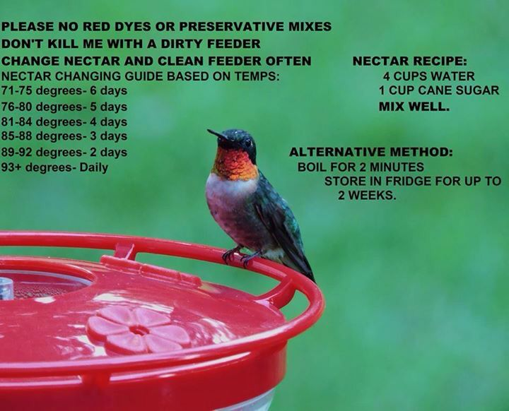 Temps To Change The Feeder More Frequently Nectar Recipe And Storage Time Hummingbird Food Hummingbird Nectar Humming Bird Feeders