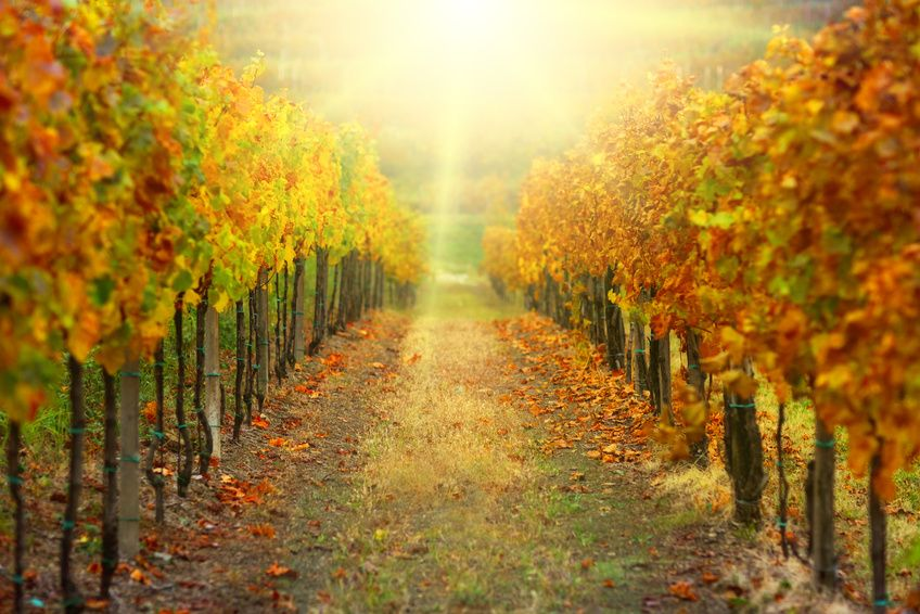 What's In Store For Fall? Get Our Forecast! - Farmers' Almanac