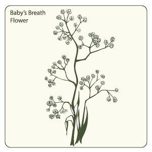 baby breath flower