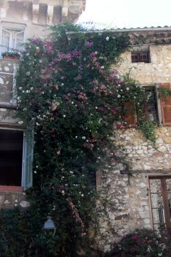 cbbphoto:  Wall of flowers in Saint Paul de Vence, an ancient village in the south of France