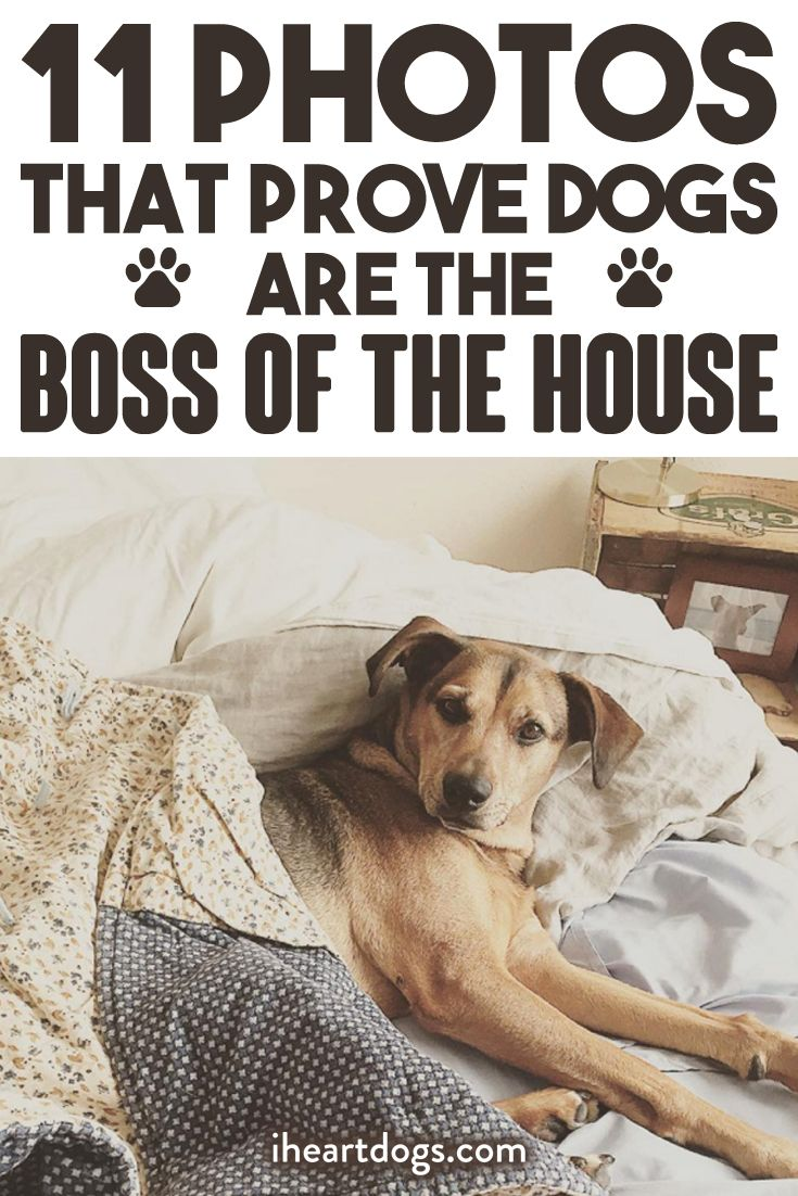 11 Photos That Prove Dogs Are The Boss Of The House I Love Dogs