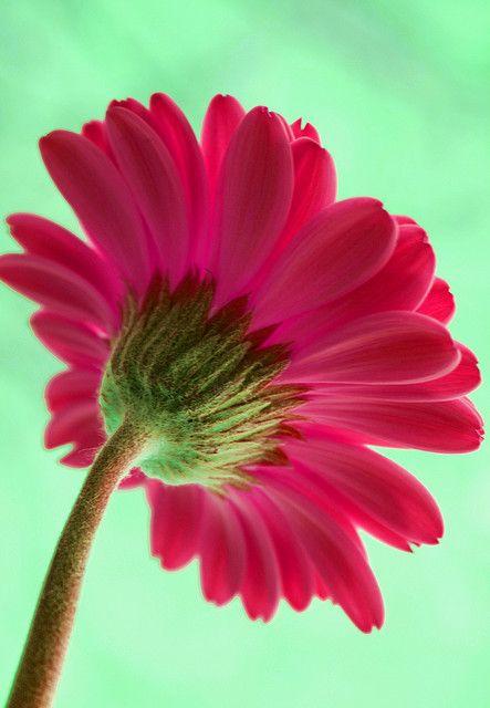 #pink #aqua