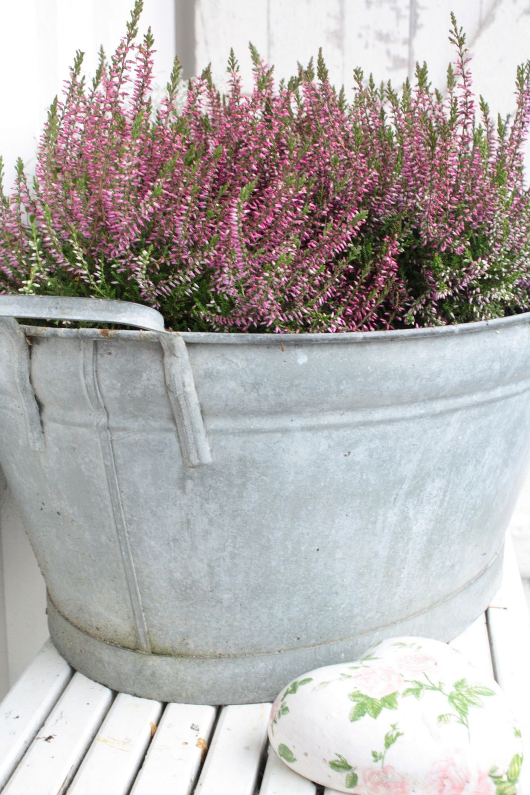 Plant Your Heather In Old Galvanized Tins And Pots For A Great Look Garden Containers Cottage Garden Garden Inspiration