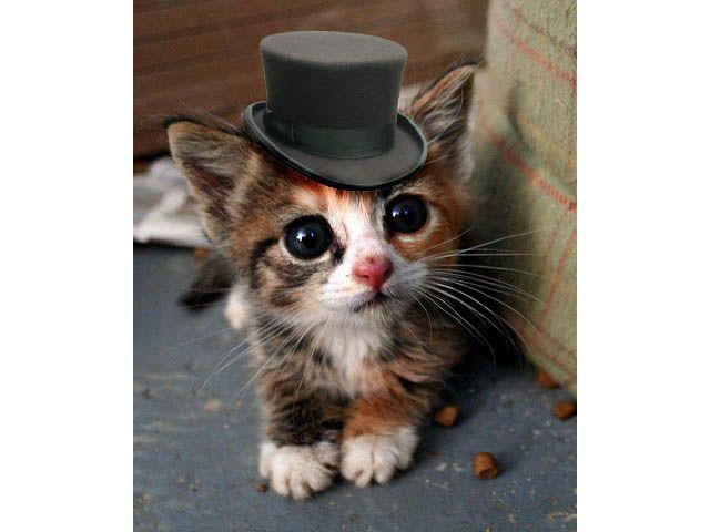 Kitten In A Top Hat Kittens Cutest Cute Little Kittens Cute Baby Animals