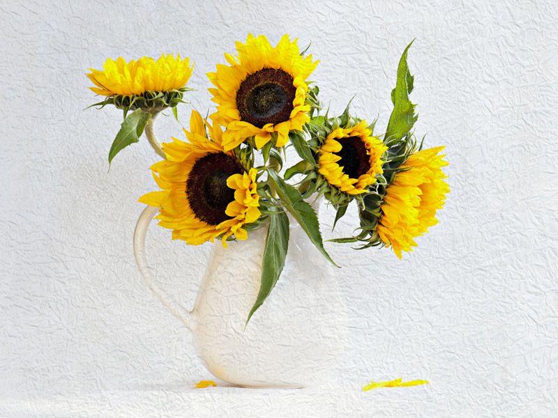 02 Sunflowers